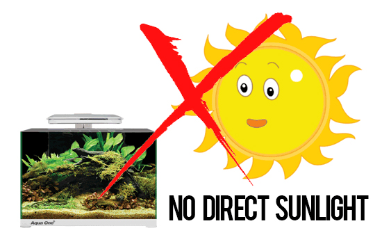 1. Avoid Direct Sunlight