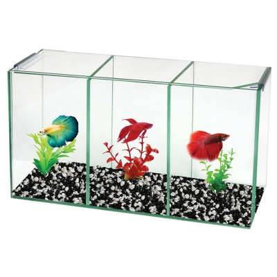 Betta Trio Cube Glass W/Lid 36x12x20cm H
