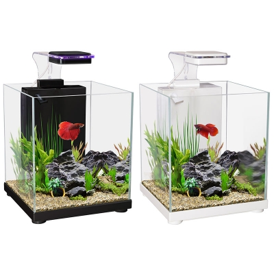 Betta Sanctuary