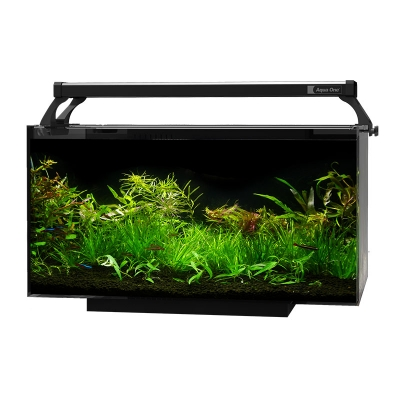 AquaFlora 36 Glass Planted Aquarium
