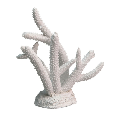 White Coral Staghorn