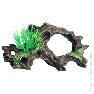 Driftwood with Plant